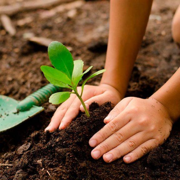 Passa på att ge bort ett träd för miljön när du handlar på TeBoon.se